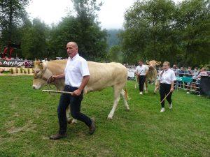 Le concours départemental de la Blonde d'Aquitaine